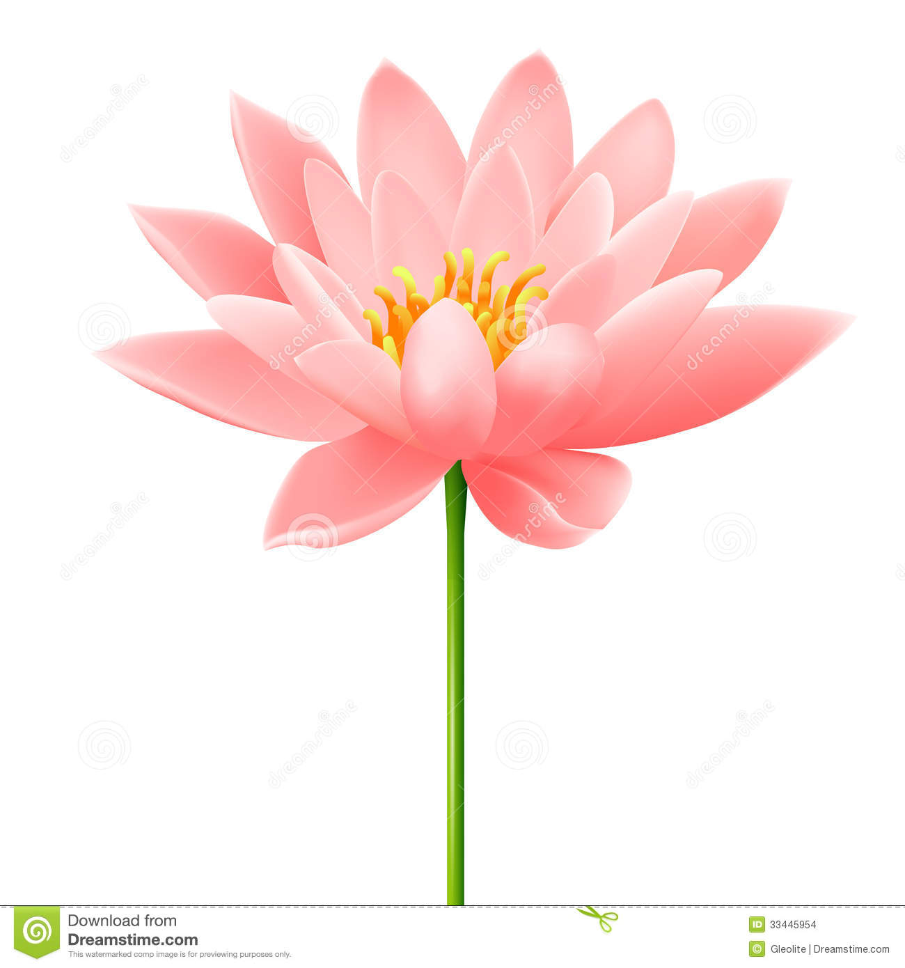 Lotus Flower Stock Images Image 33445954