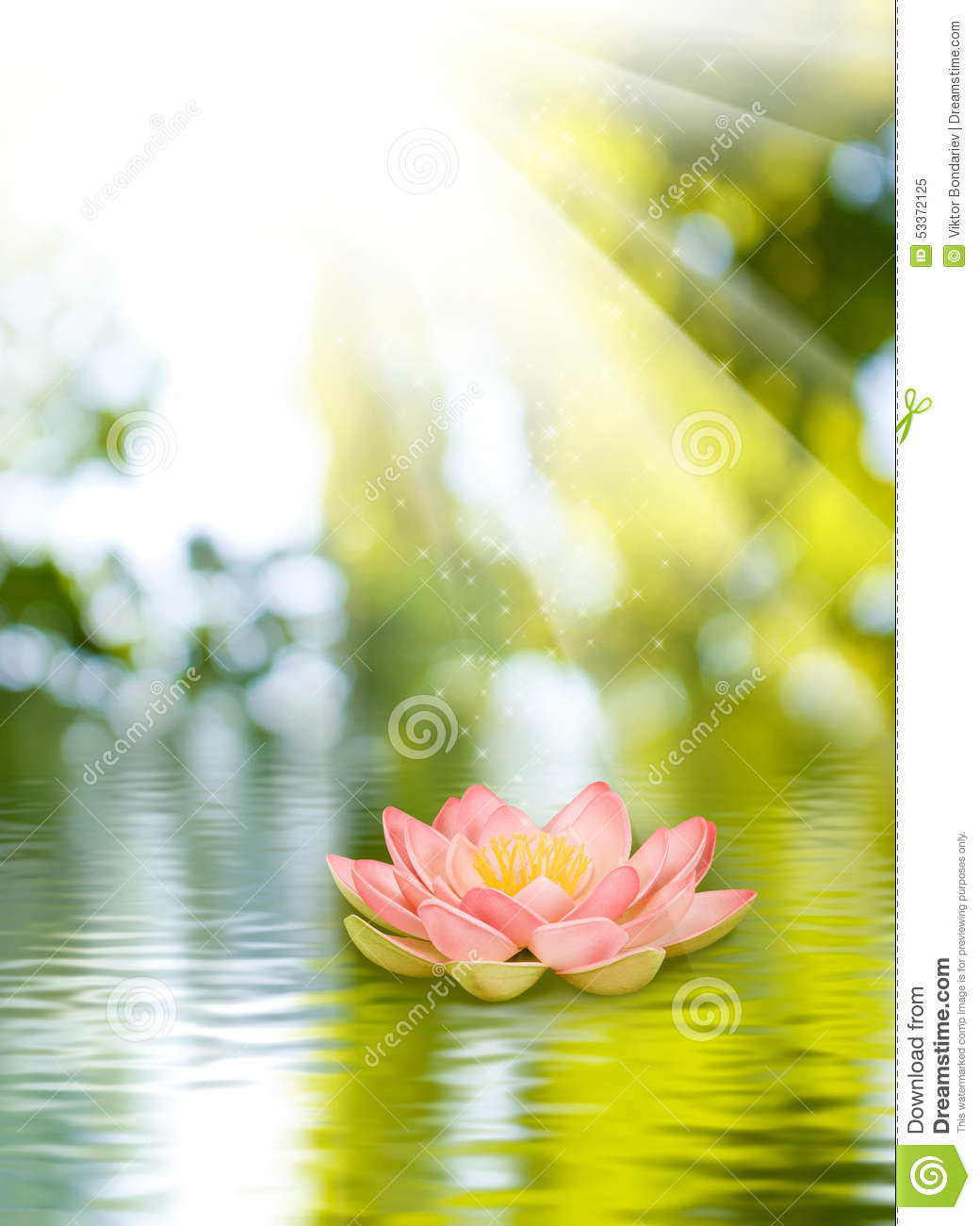 Lotus Flower On The Water Stock Image Image Of Blue 53372125