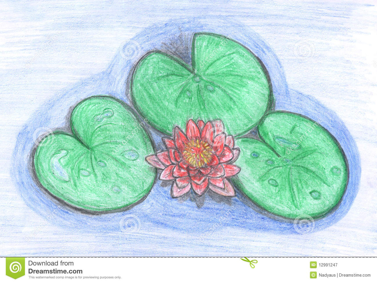 Lotus Flower In Water Drawing Royalty Free Stock graphy Image