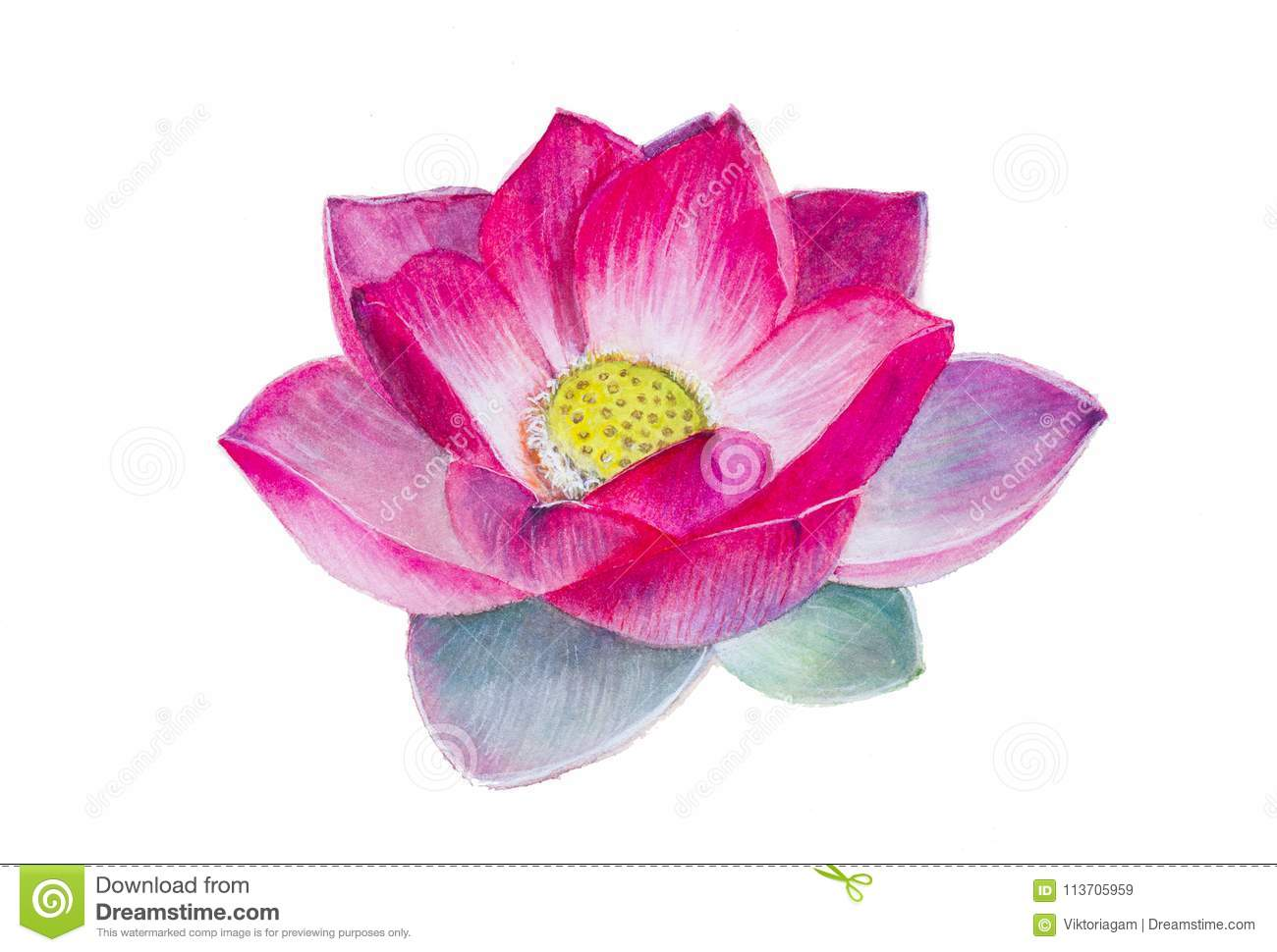 A Lotus Flower Watercolor Painting Realism Stock Illustration