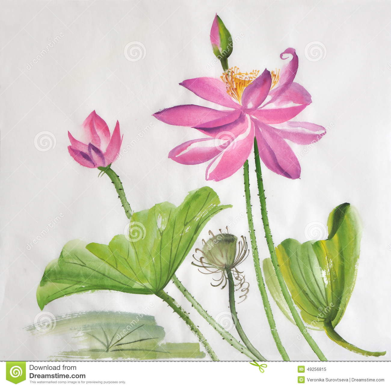 28 27 Best Images About Lotus On Watercolor Paper