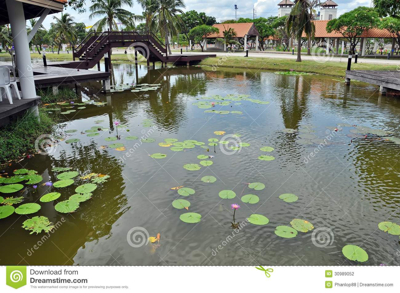 Pool in park with lotus leaves and flowers royalty free for Pond dealers