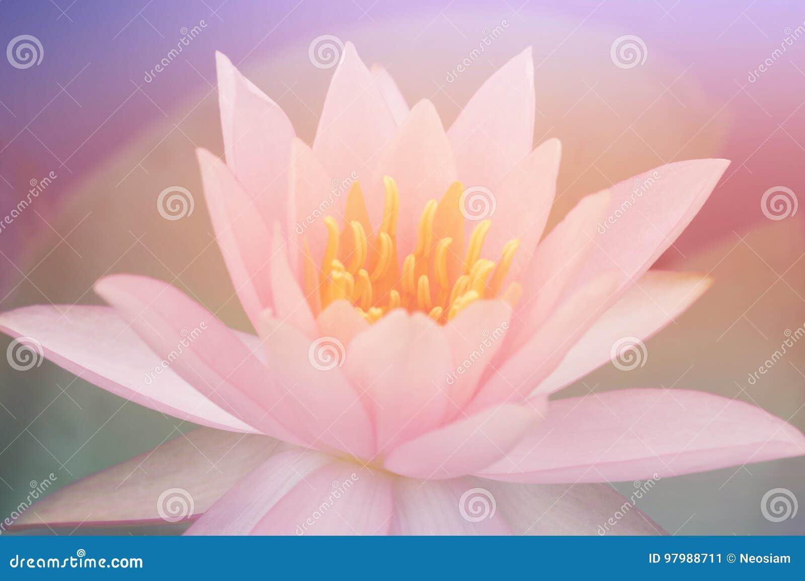 Lotus flowers stock image image of decoration green 97988711 lotus flowers in pastel colors sweet background izmirmasajfo