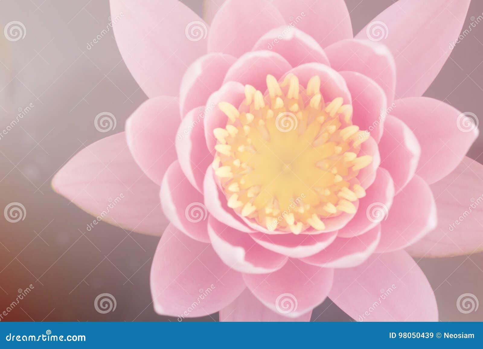 Lotus flowers stock image image of flower fresh abstract 98050439 lotus flowers in pastel colors sweet background izmirmasajfo
