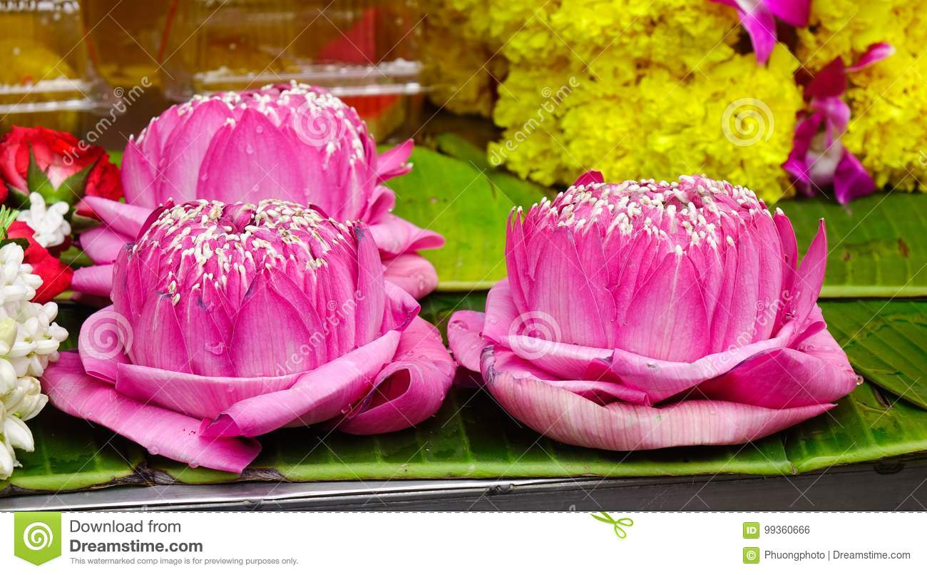 Praying flowers for sale at hindu temple stock photo image of food lotus flowers for sale at hindu temple in bangkok thailand izmirmasajfo
