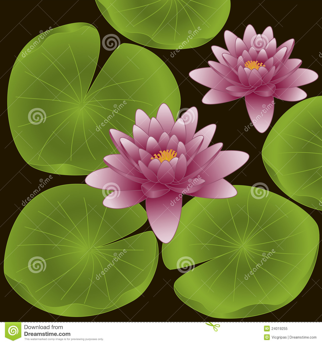 Lotus Flowers Vector Illustration Stock Vector Illustration Of