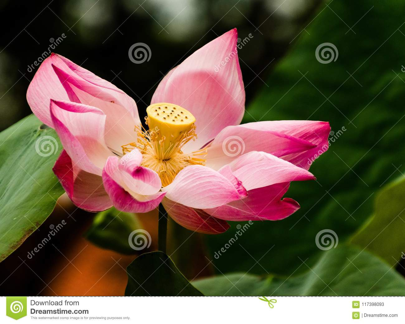 Lotus At The Foot Of The Buddha Stock Image Image Of Buddhism