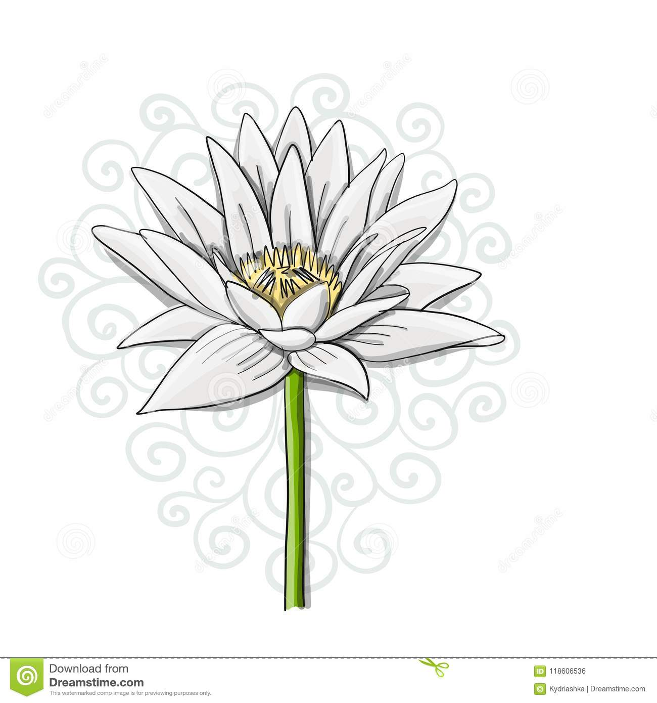 Lily Flower Sketch Stock Illustrations 8 123 Lily Flower Sketch Stock Illustrations Vectors Clipart Dreamstime