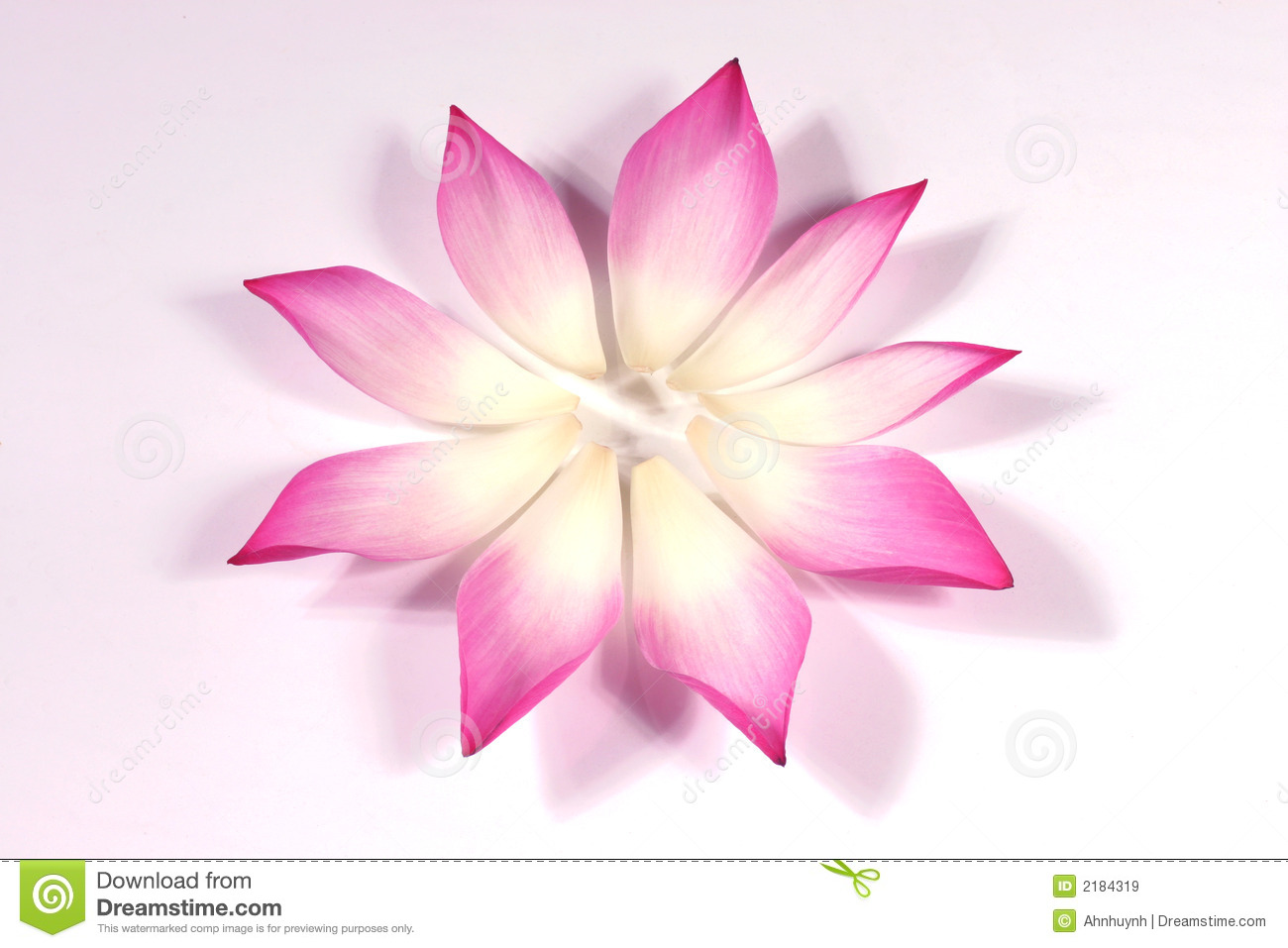 Lotus Petals With Its Bud Stock Image Image Of Asia Attractive