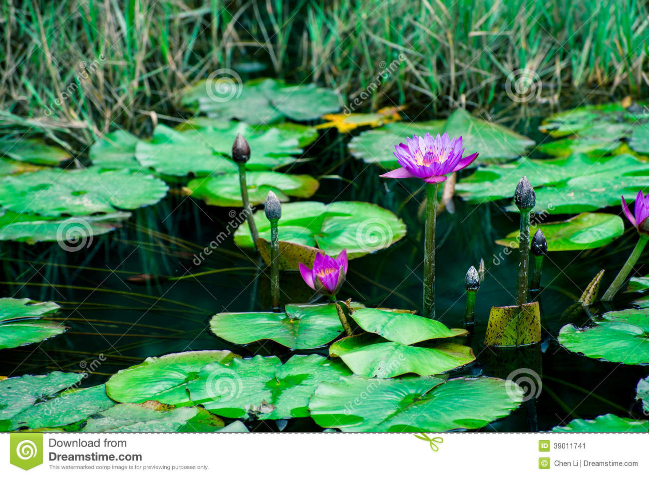 Lotus stock image image of reproduction detail open 39011741 royalty free stock photo izmirmasajfo Gallery