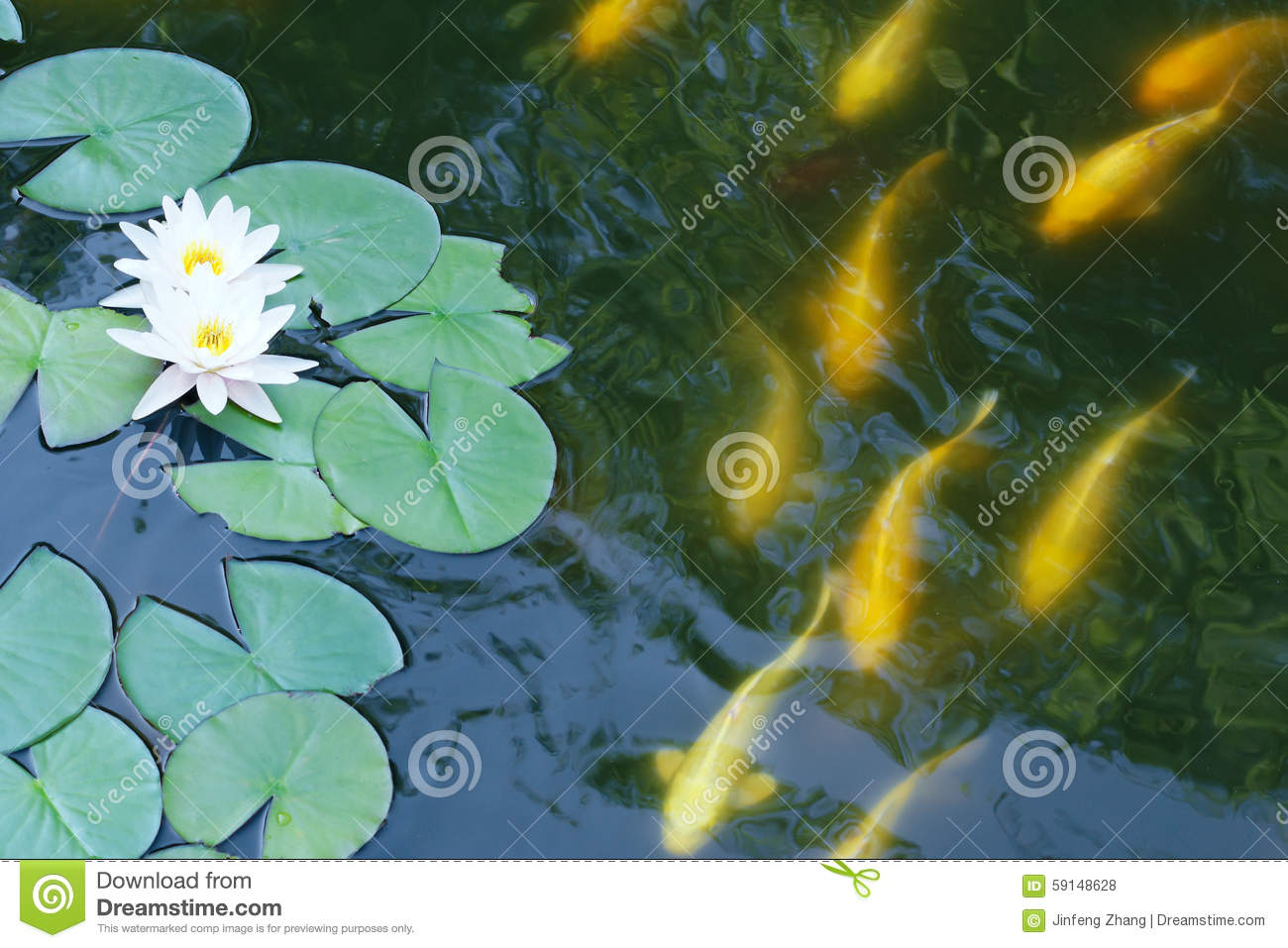 Lotus pond stock photography 71131016 for Pond dealers