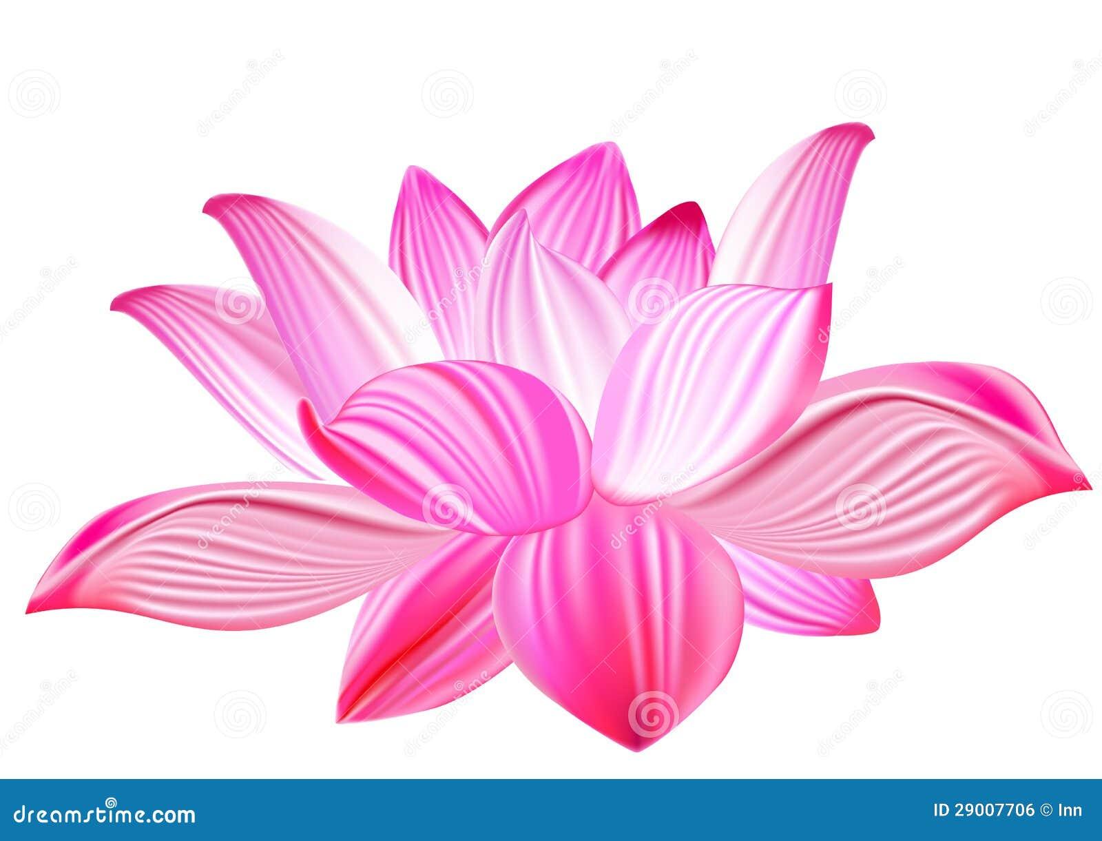 Lotus Flower Bomb Downloadlotus Realistic Vector Illustration