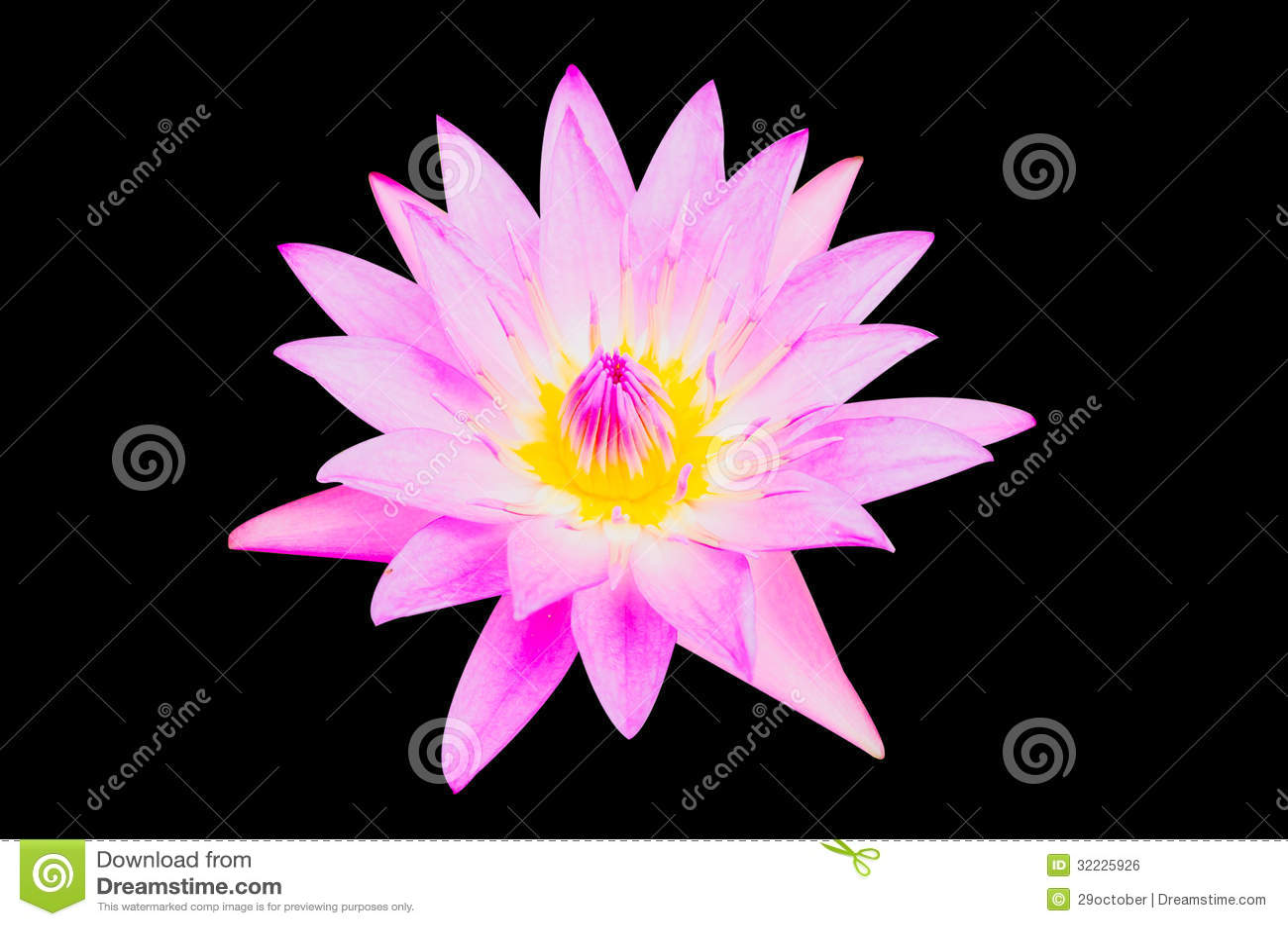 Download Lotus roxo foto de stock. Imagem de ornament, closeup - 32225926