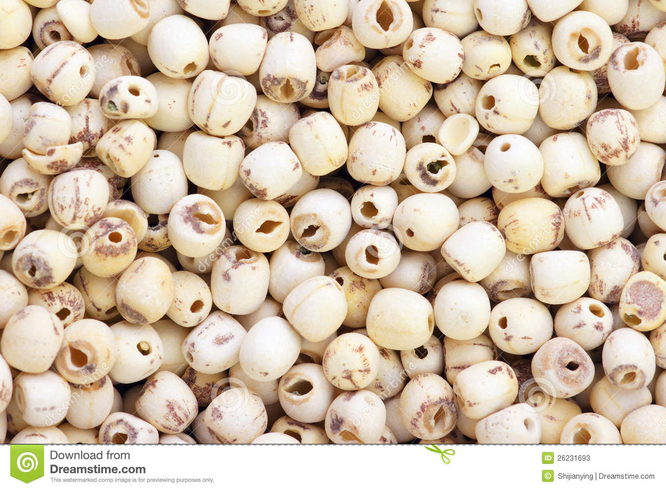 Lotus Seed Stock Photos Image 26231693