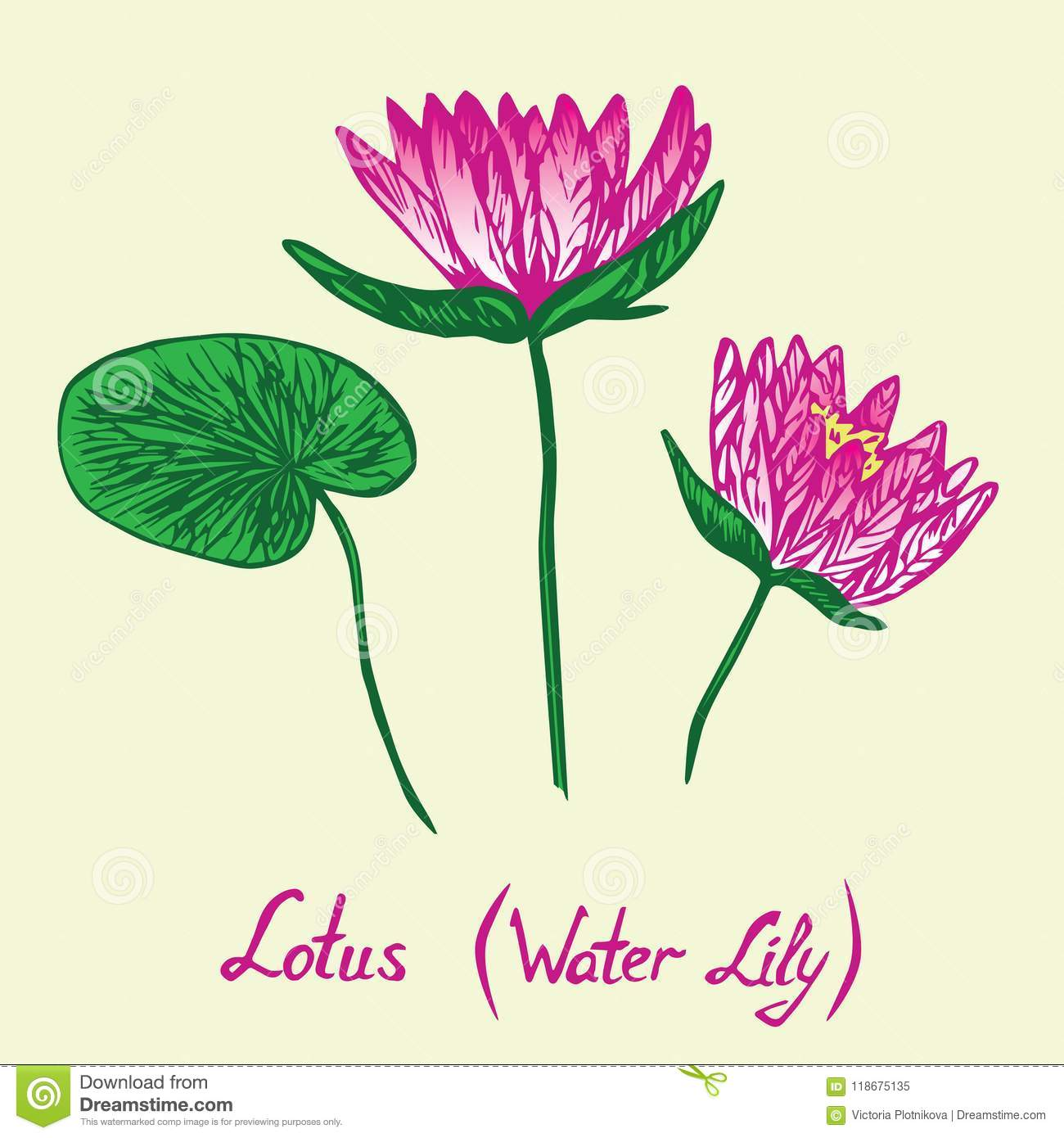 Lotus water lily flowers and leaves set with inscription stock lotus water lily flowers and leaves set with inscription izmirmasajfo