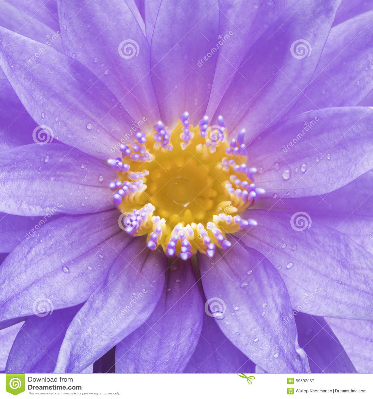 Lotus Is Water Lily In The Garden Stock Image Image Of Healthcare