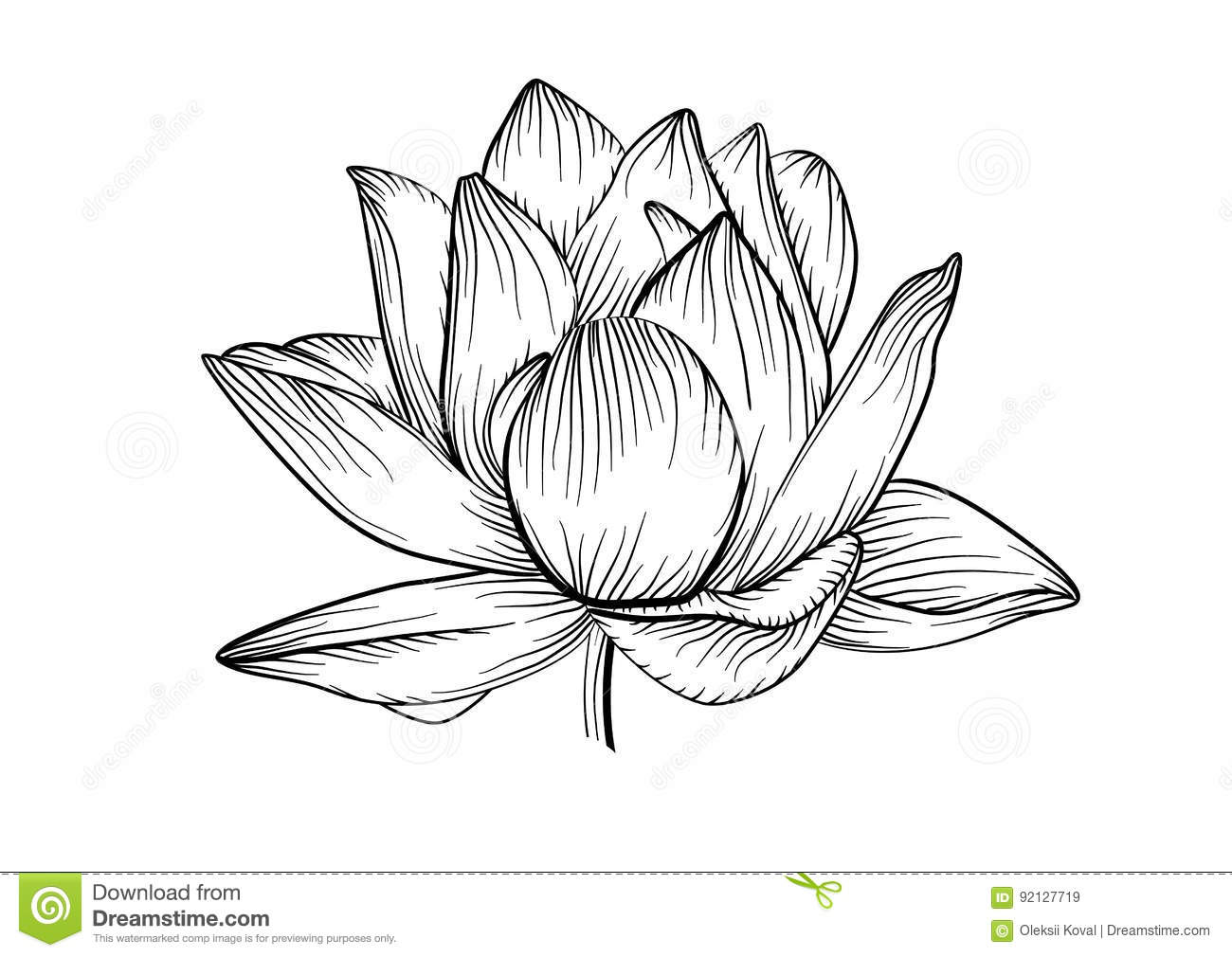 Lotus Water Lily Vector Beautiful Flower Line Black And White T