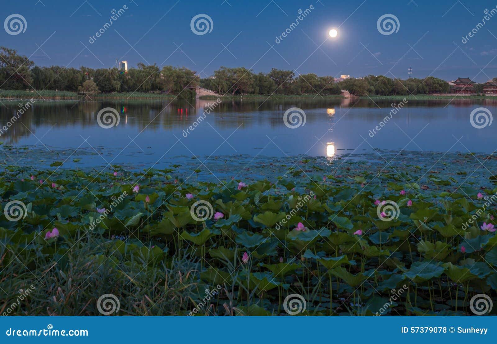 Lotusbloemvijver bij nacht