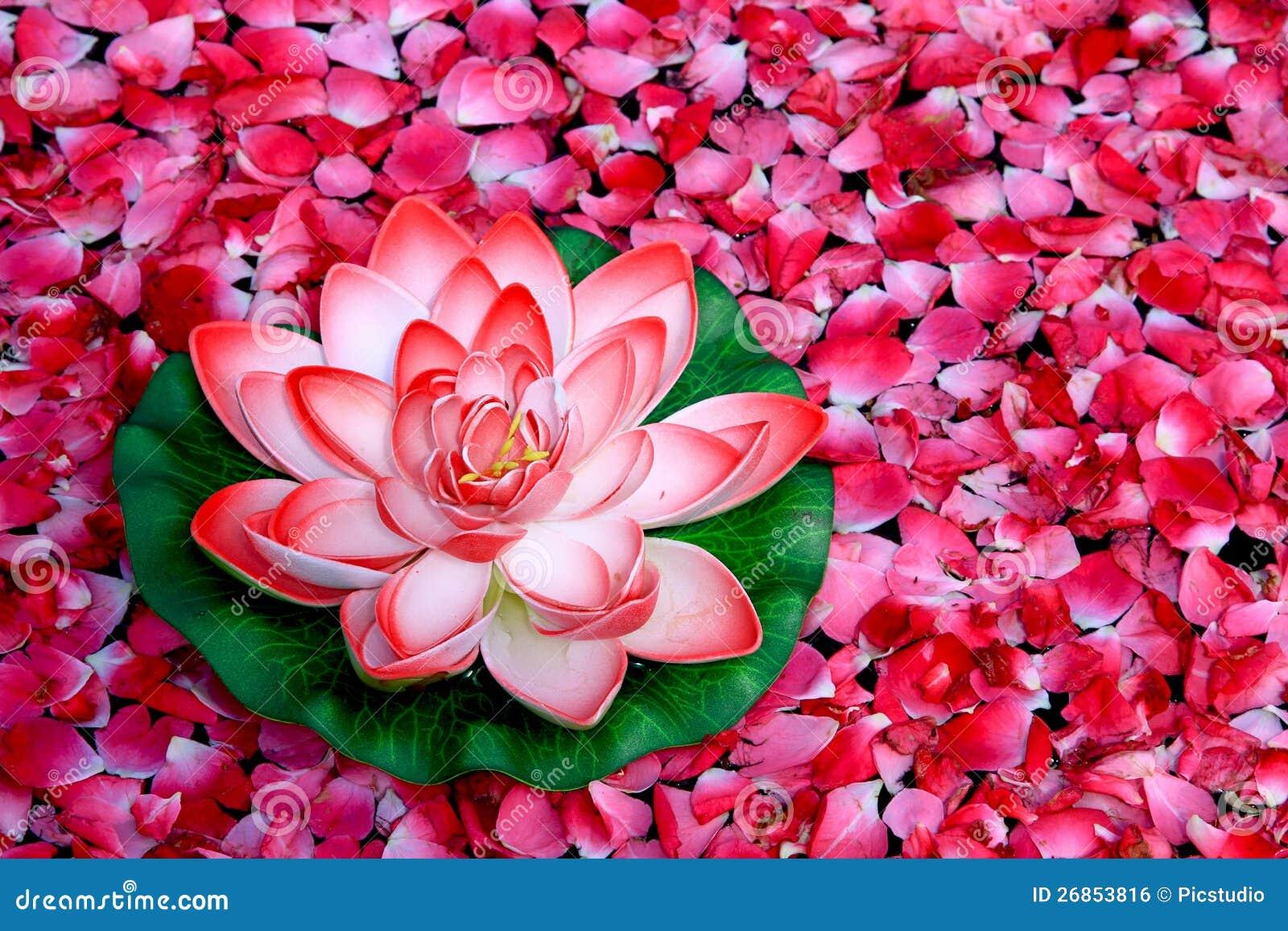 Lotusblommablomma