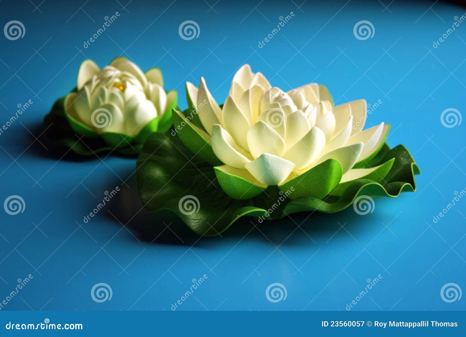 Lotusblommawhite