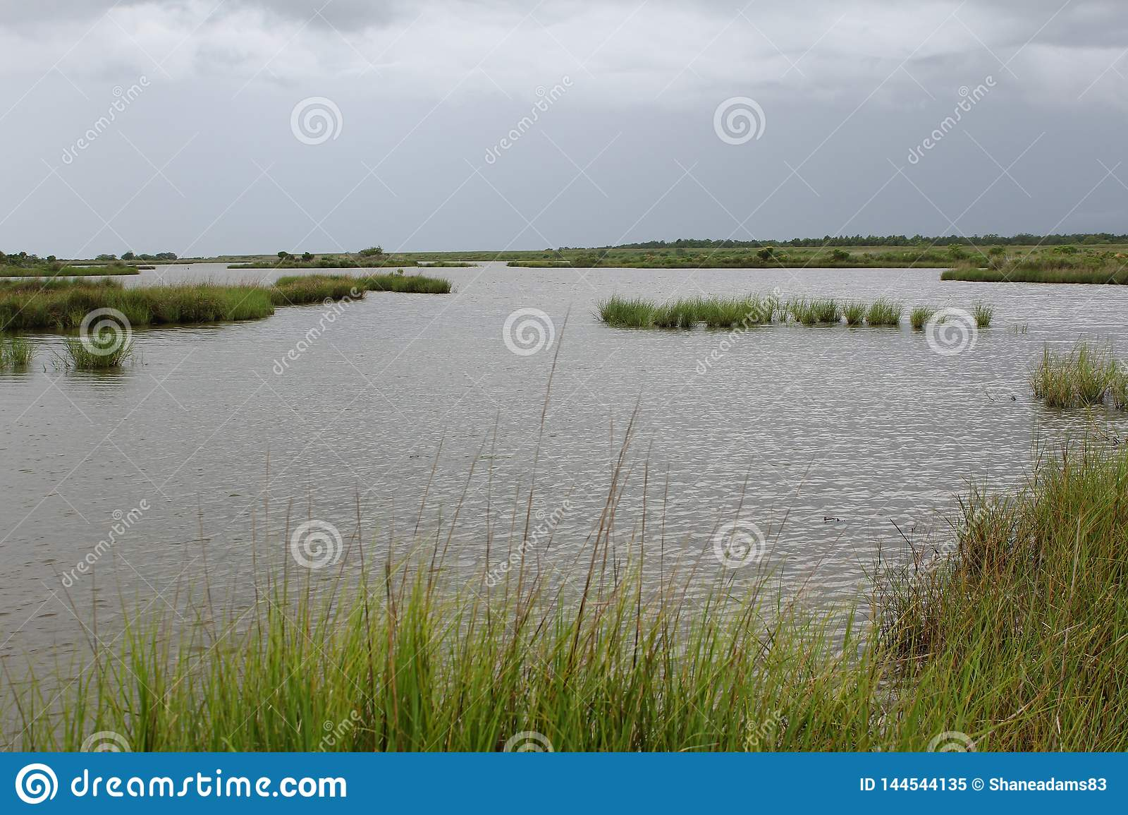 Louisiana Marsh Grass