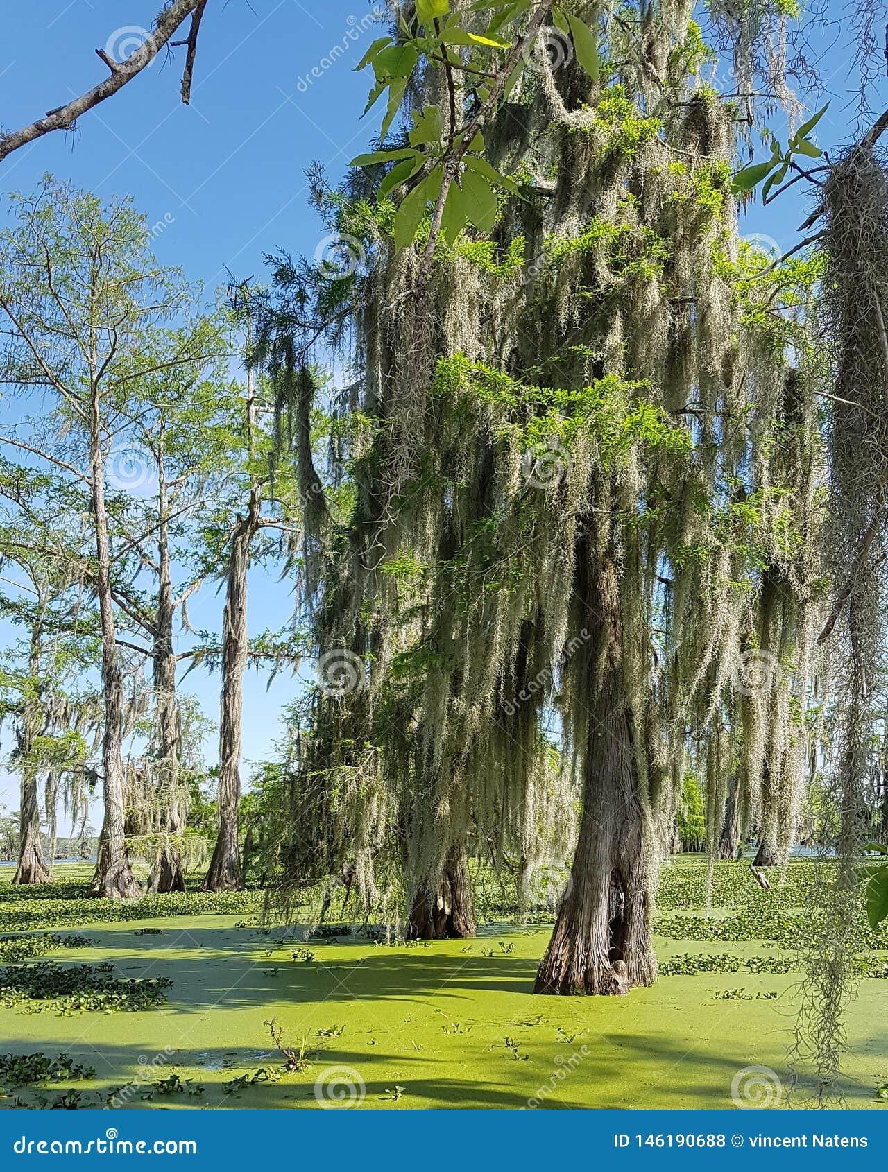 Louisiana-Sumpfausflug