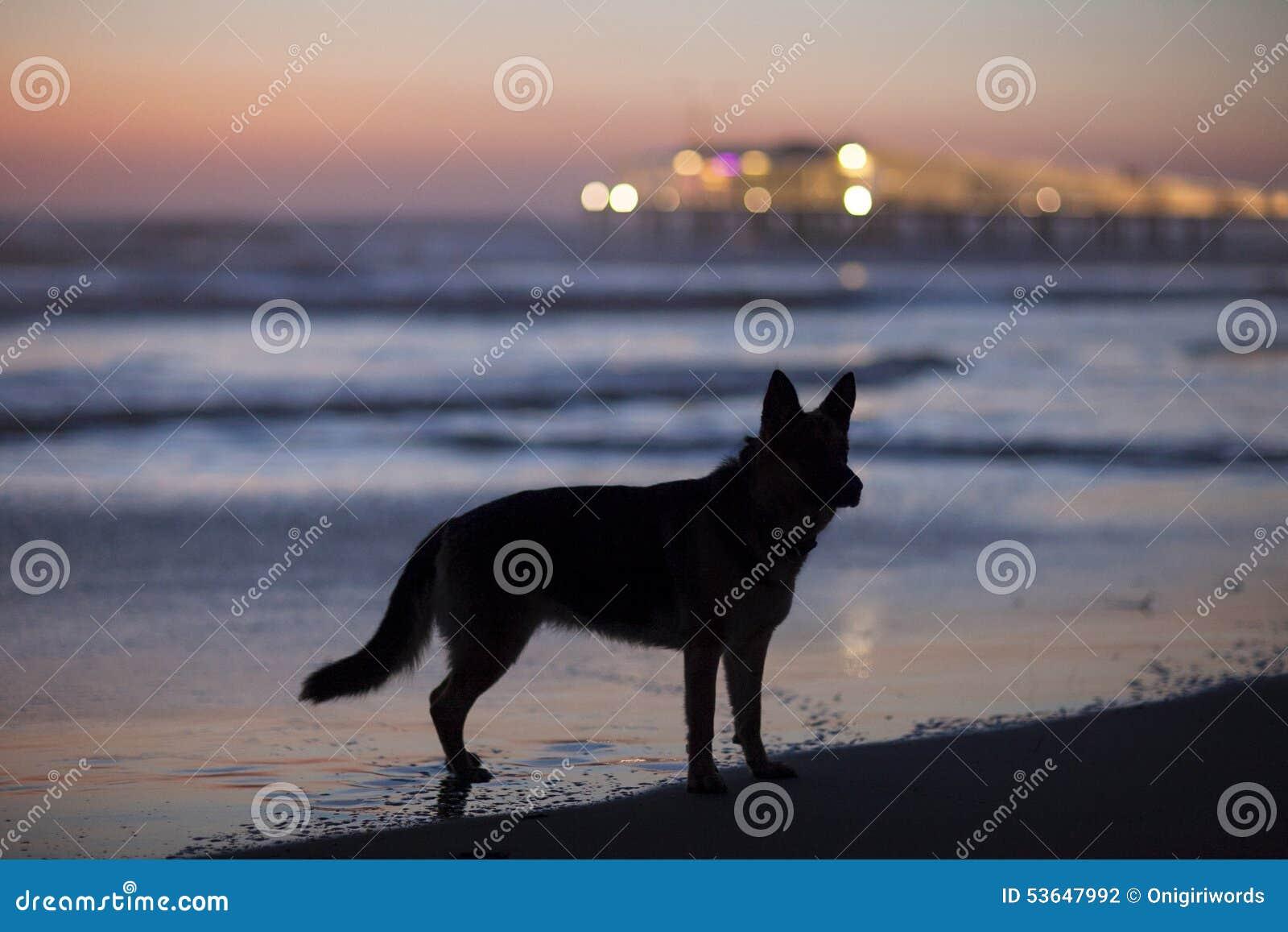 Loup de mer