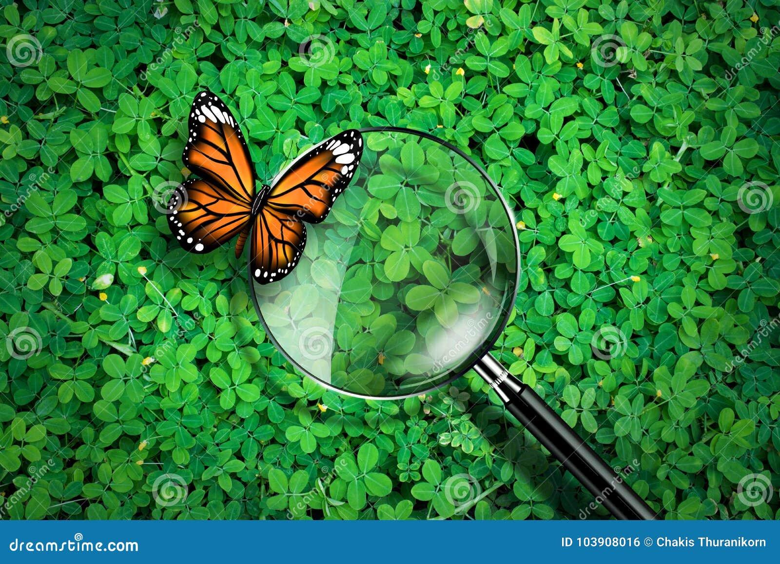 Loupe avec le papillon sur le fond d herbe verte, concept d écologie d exploration,