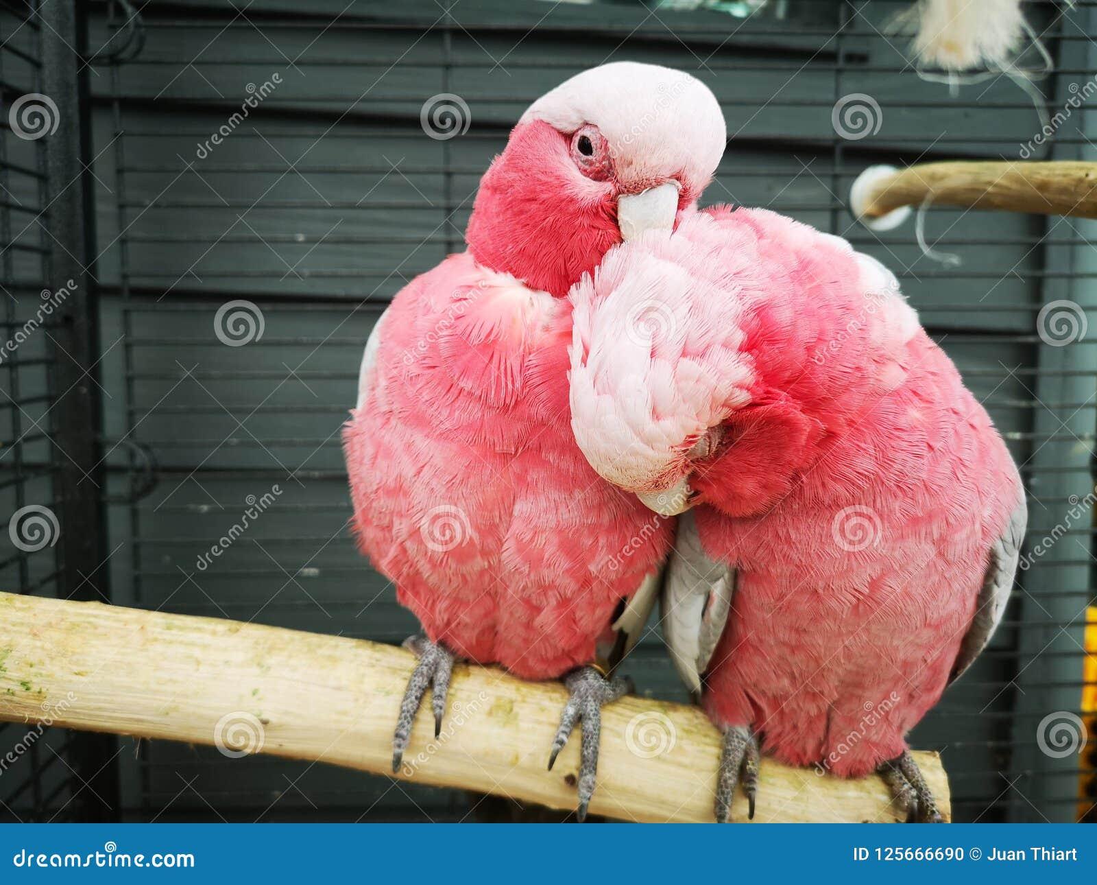 Love Birds Stock Photo Image Of Beautiful Love Birds 125666690