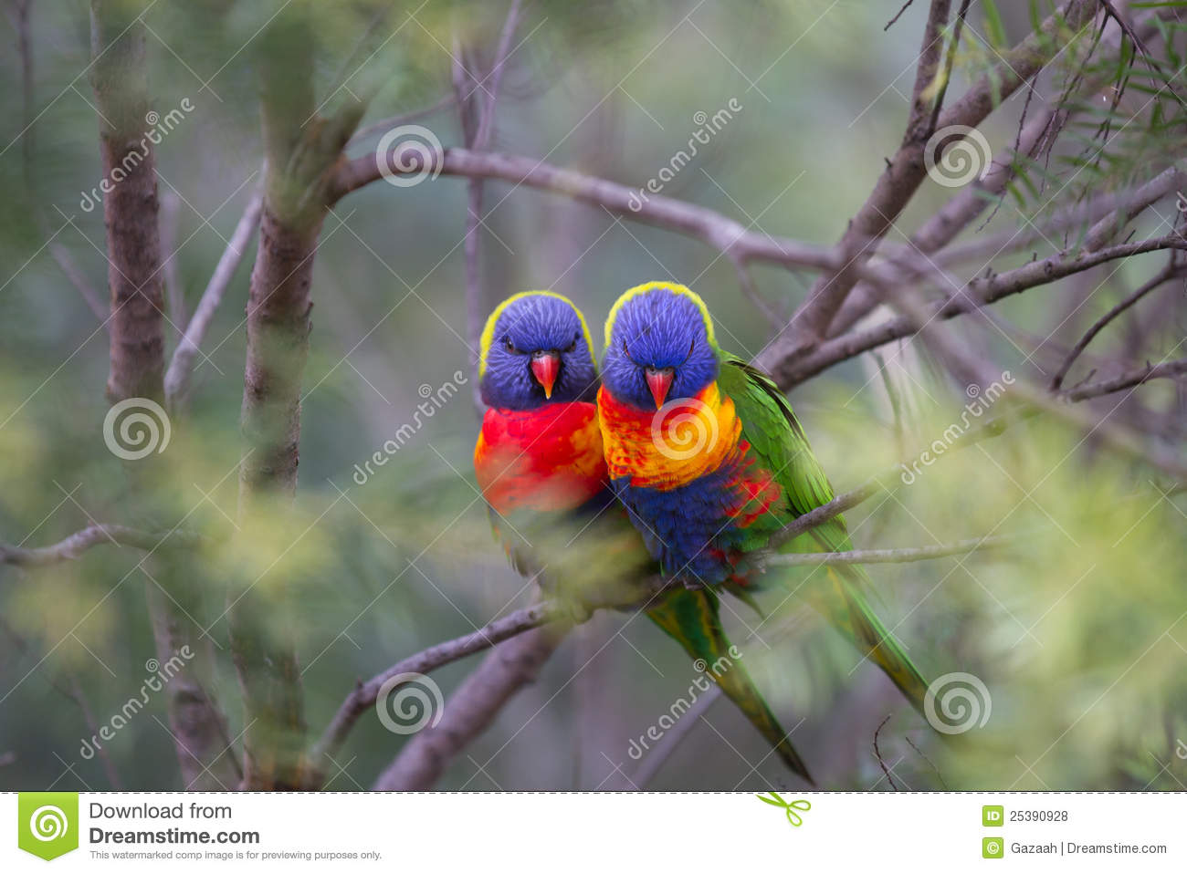 Love Birds in a soft bush setting