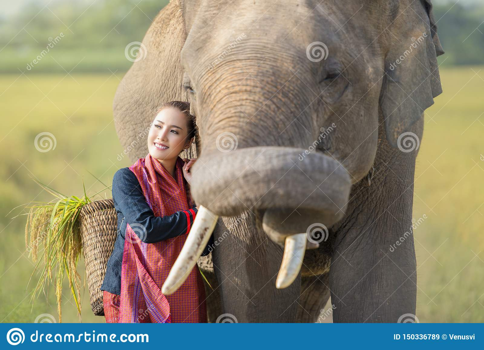 Love, bonding of people and elephants