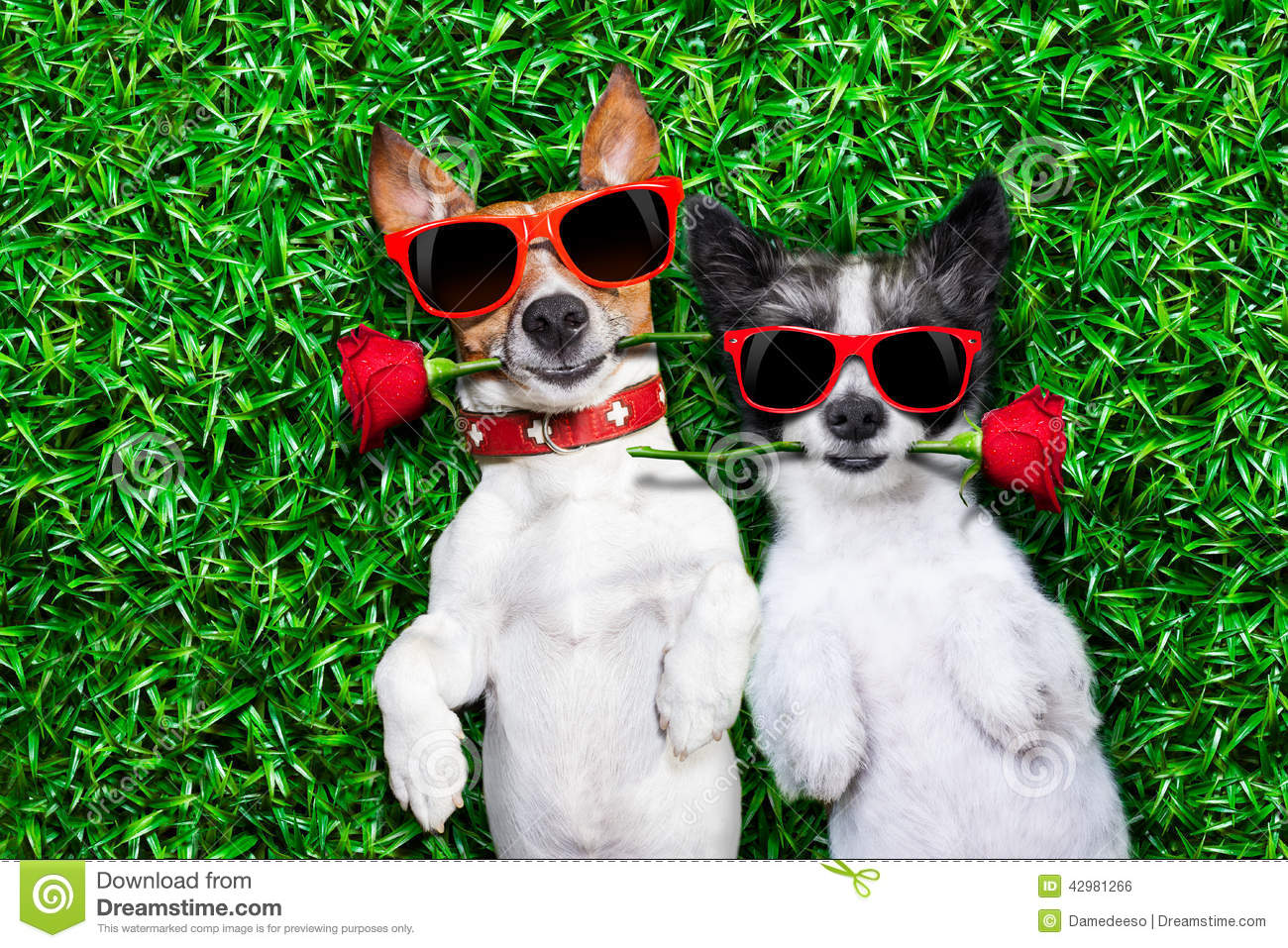 Must Love Dogs Wallpaper : Love couple Of Dogs Stock Photo - Image: 42981266