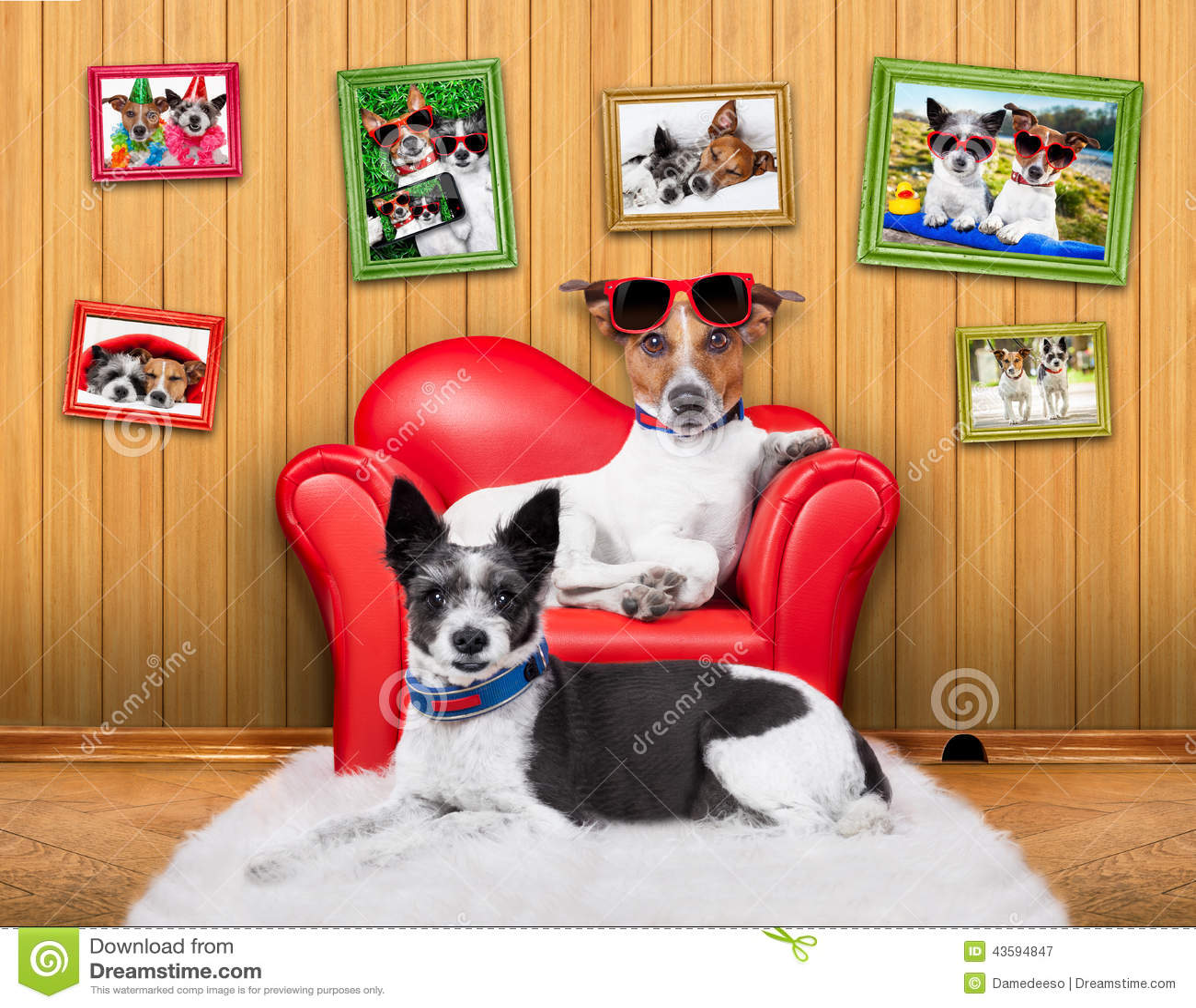 Love couple sofa dogs