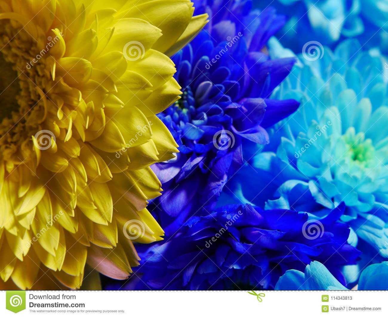 Close Up Of Yellow And Blue Flowers Macro Blossom Stock Image