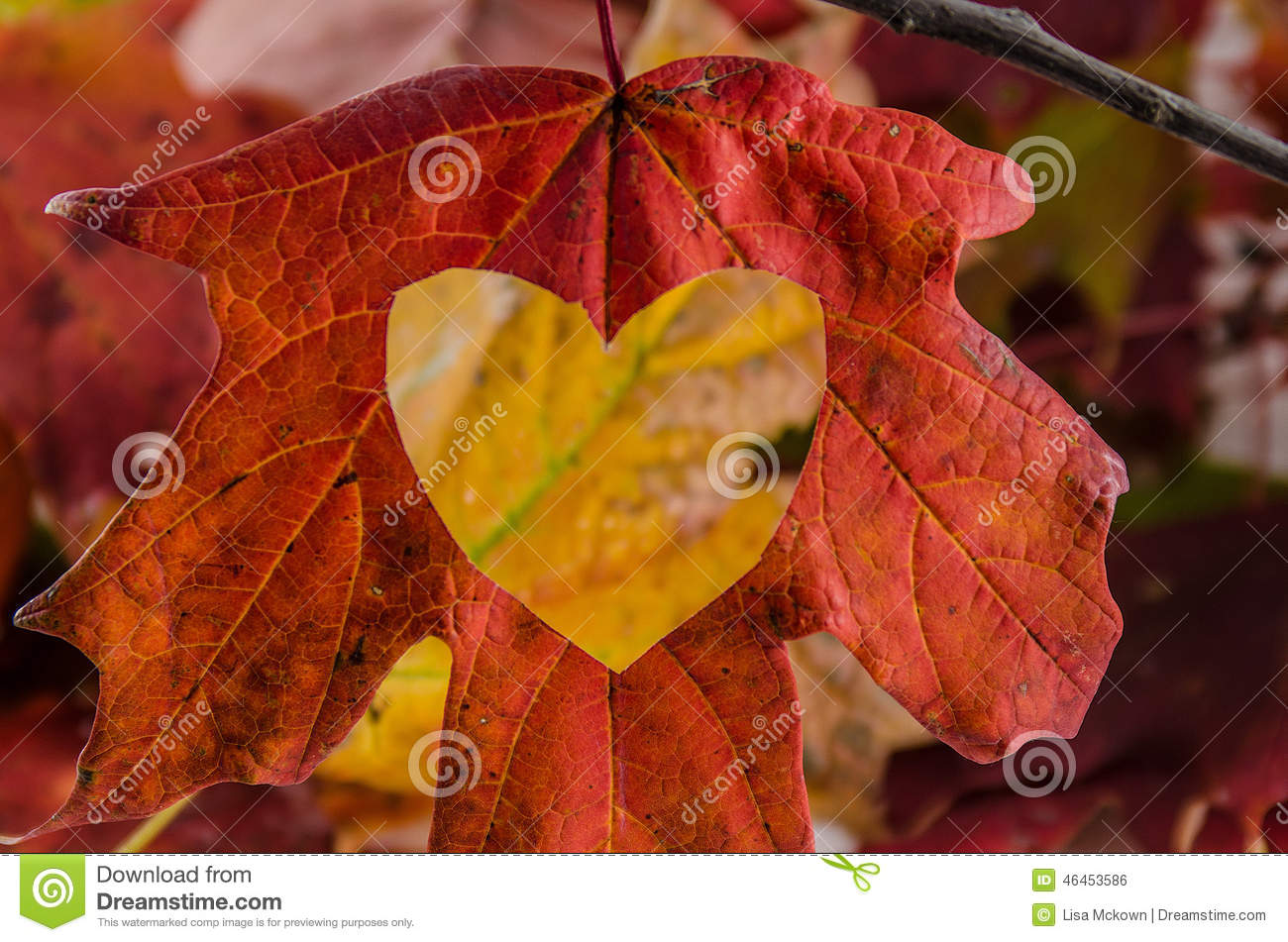 love fall with a heart cut into the leaf stock photo
