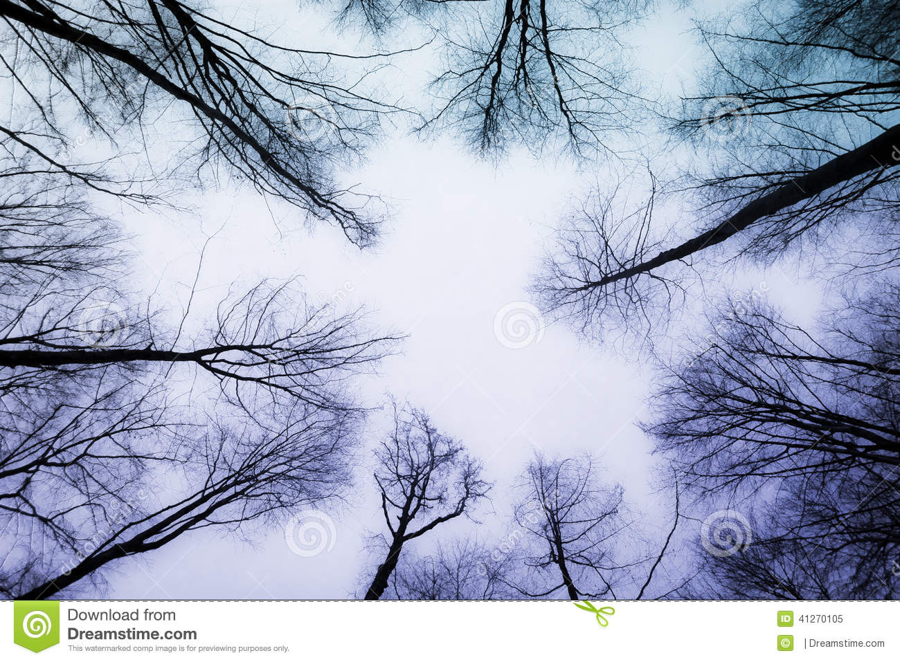 Love Forest Stock Image Image Of Forest Heaven Natural 41270105