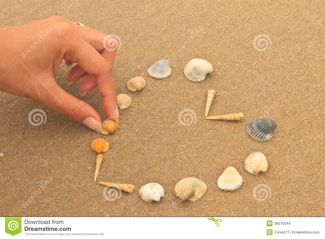 Love heart made of shells on beach stock images image for What are shells made of