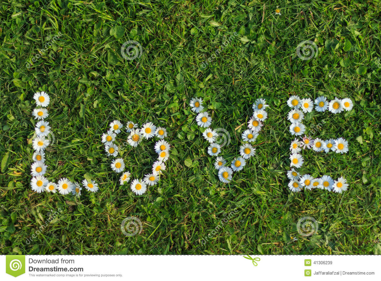 Love quote of daisy flowers stock image image of love plants love quote of daisy flowers izmirmasajfo