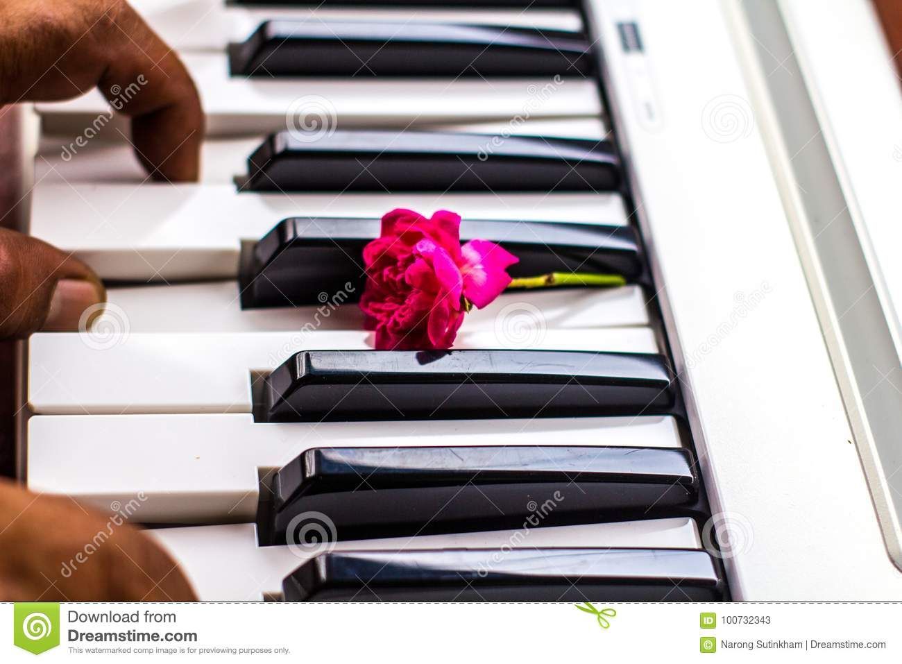 Love Songs Piano With Pink Flowers Stock Image - Image of color