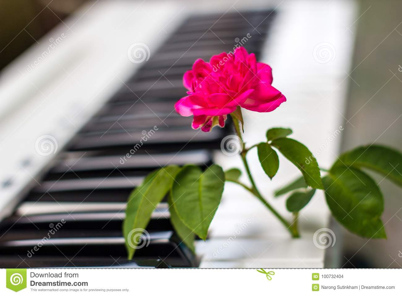Love Songs Piano With Pink Flowers Stock Photo Image Of Passion