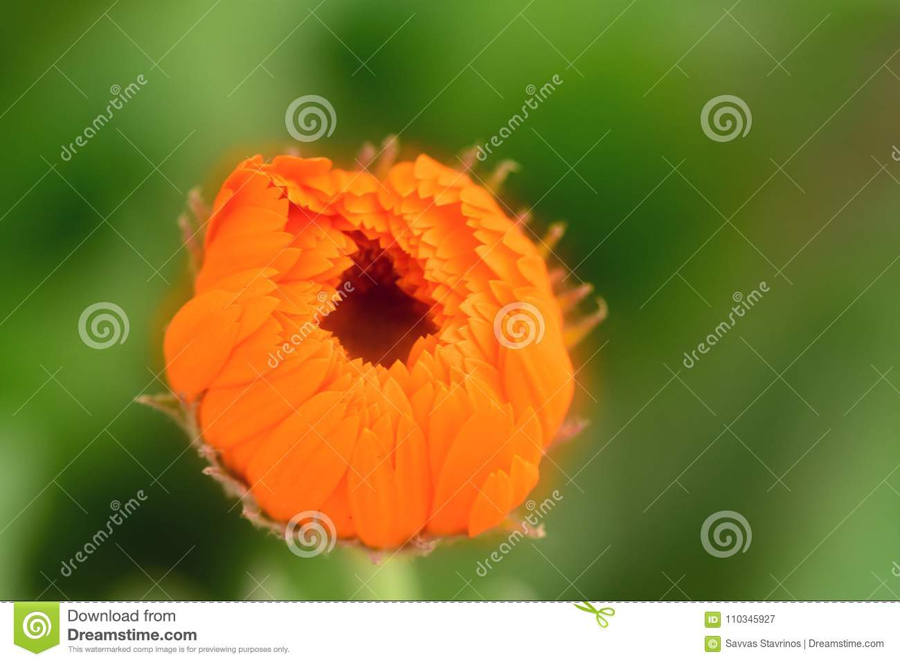 Plants With Daisy Like Flowers Stock Image Image Of Around Green