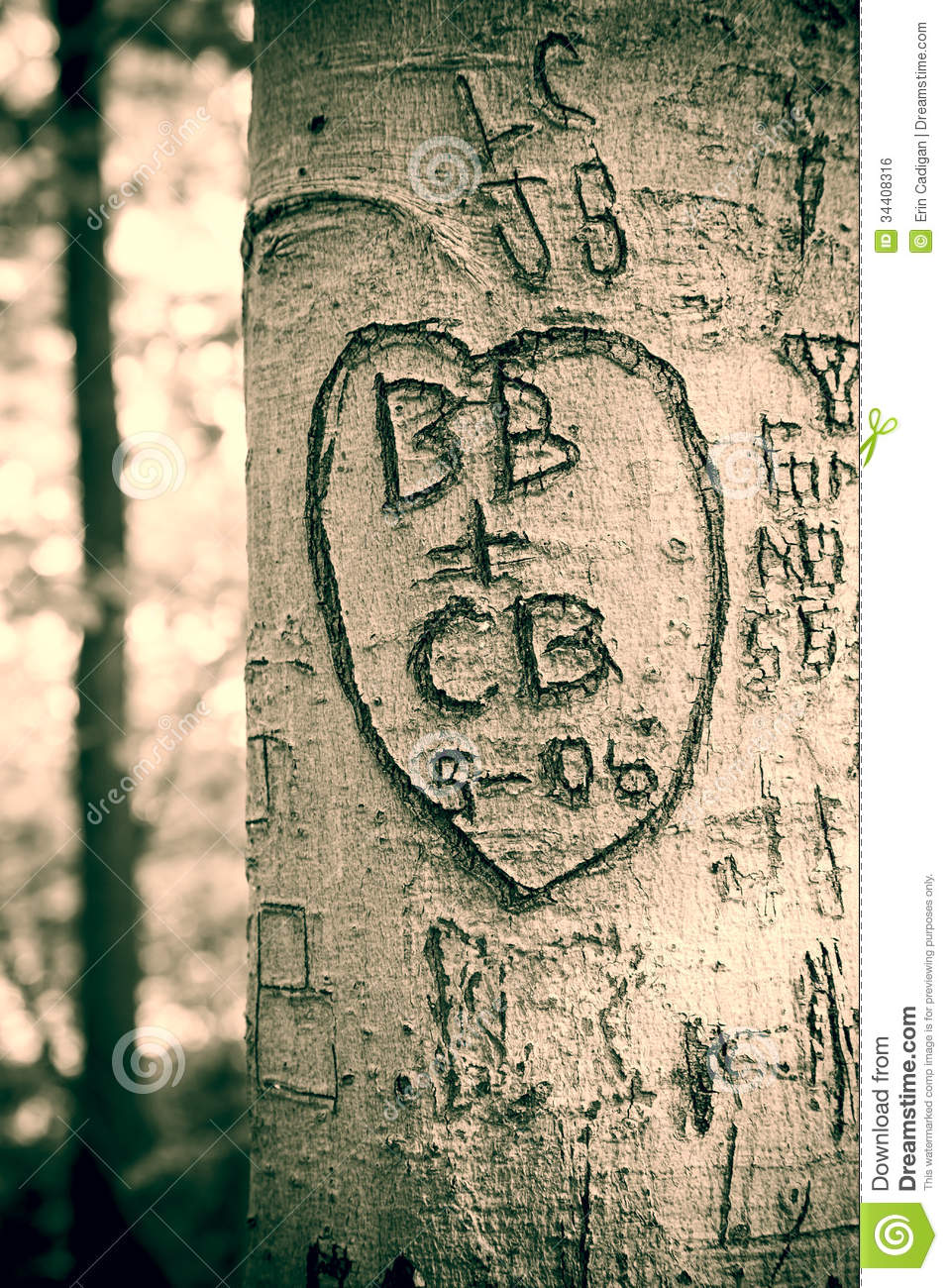 Love Tree Stock Photo Image Of Heart Woods Forest 34408316