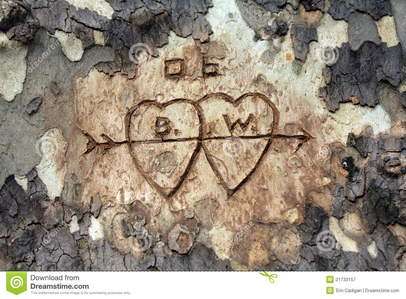 Love tree carving royalty free stock photography image