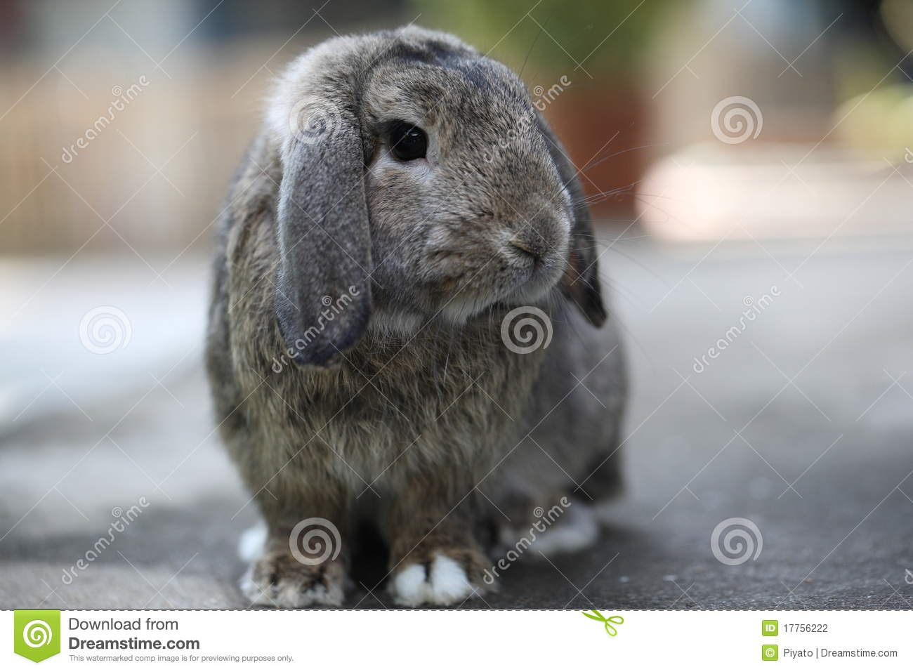 Pet Rabbit Outdoor