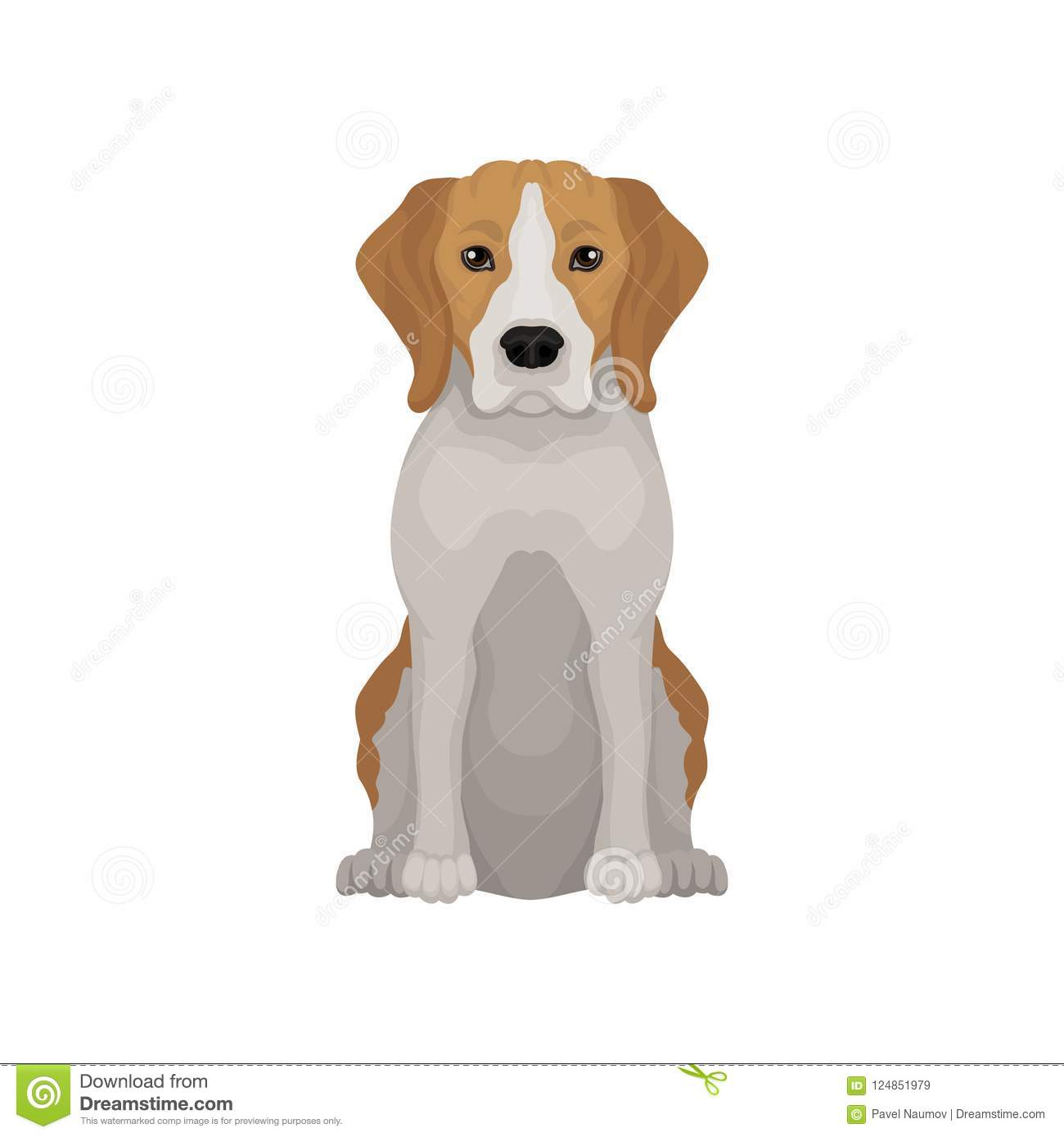 Lovely beagle in sitting position. Small hunting dog. Short-haired puppy with long ears and cute muzzle. Flat vector