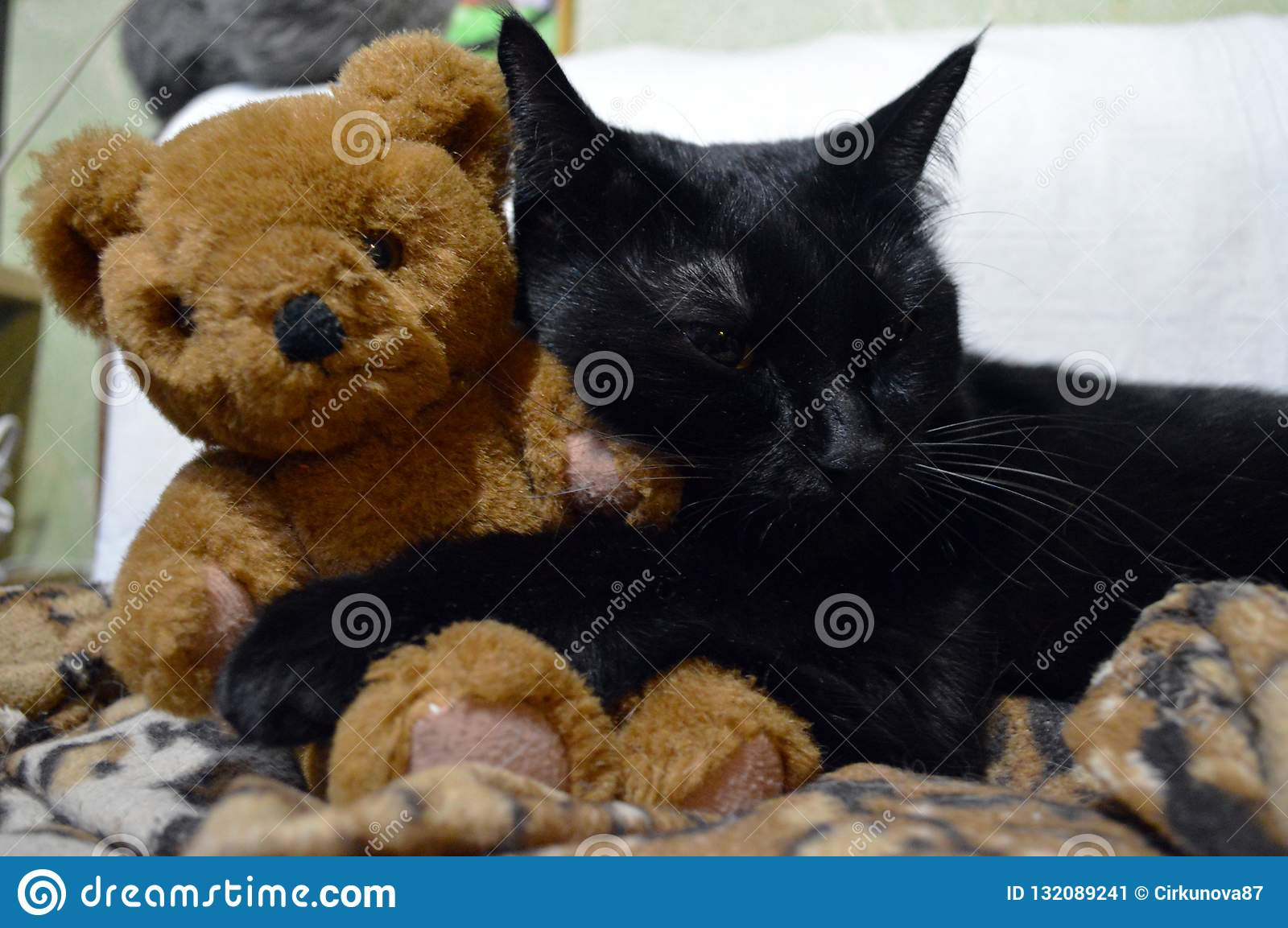 Lovely Black Cat With A Teddy Bear Stock Image Image Of Charming