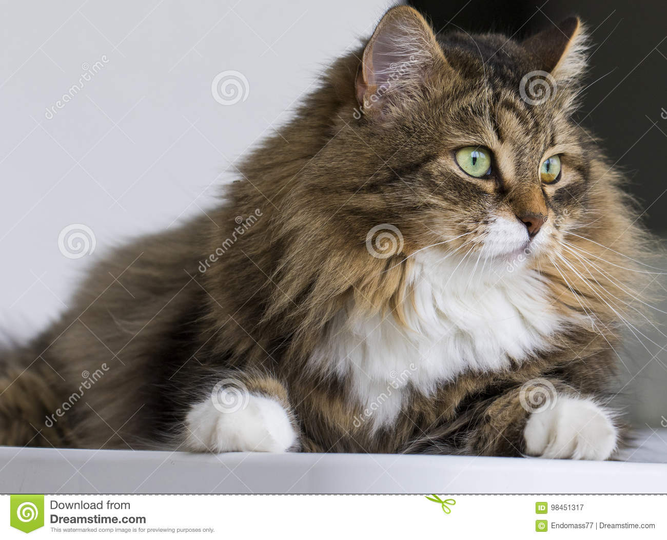 Lovely cat in the house looking out, brown tabby cat