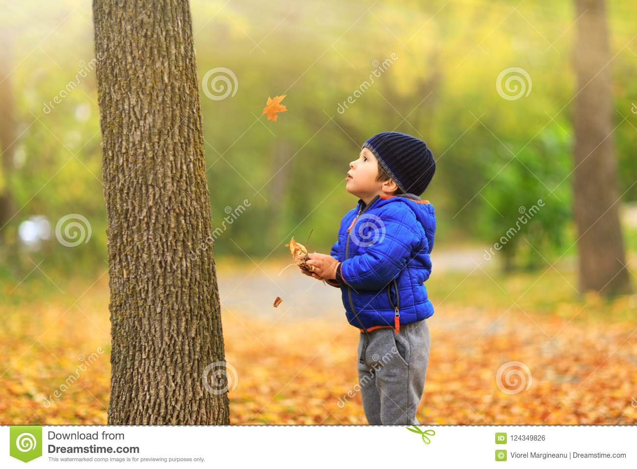 Lovely child catches the maple leaves in the fall during autumn