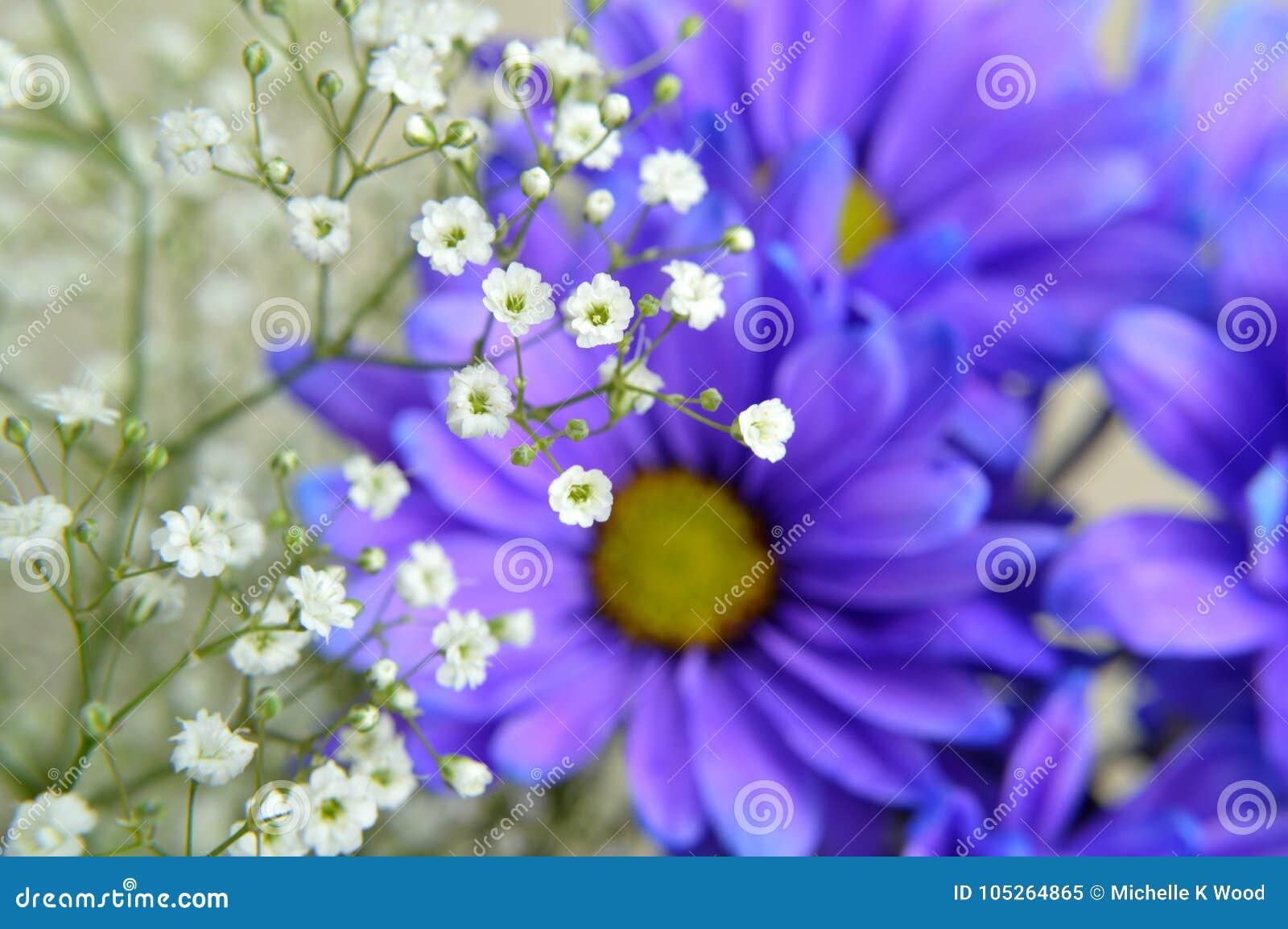 Baby`s Breath on Blue Daisy Flowers