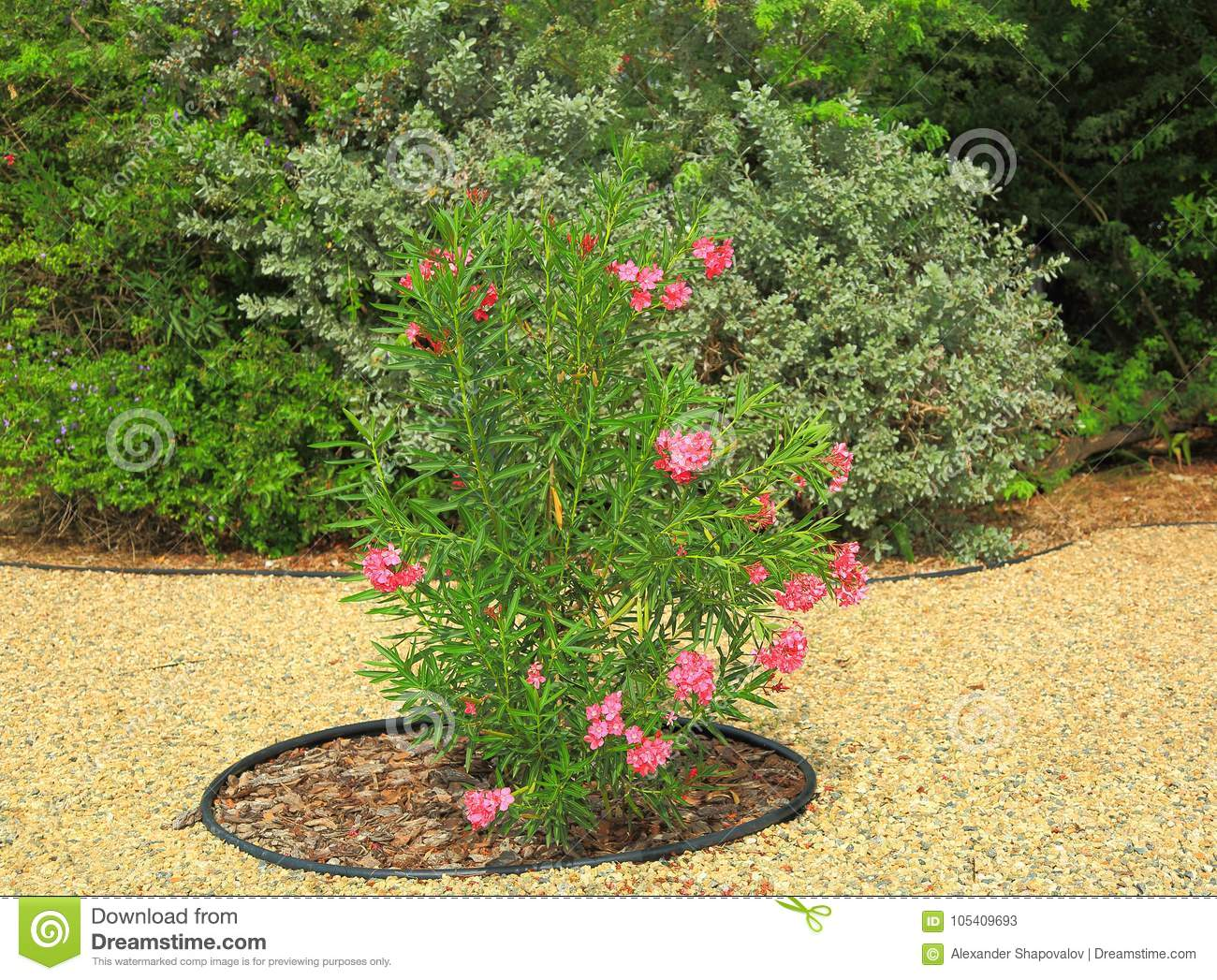 Captivating Lovely Green Plant With Pink Flowers. Nice Garden Design.